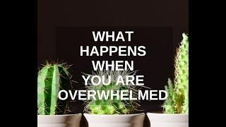 What Happens When You Are Overwhelmed
