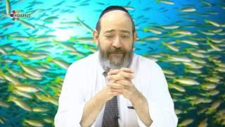 Holiness and the Laws of Kashrut