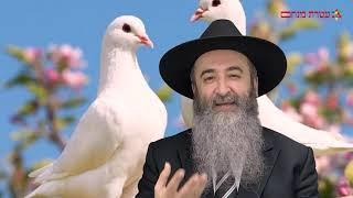 Шоломия Пеш Гирим